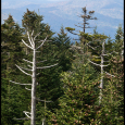 Clingman's-Dome-Two-#21